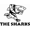 sharks-rugby